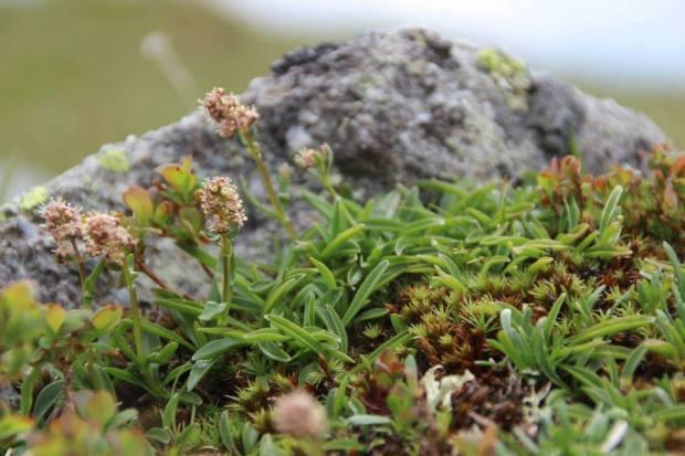 speick-pflanze-10_speick-naturkosmetik