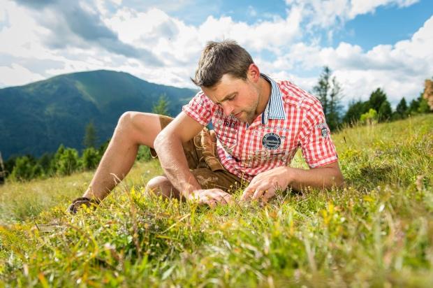 Almbauer bei der Speick-Ernte (2)