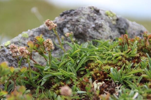Speick Pflanze 14_©SPEICK Naturkosmetik