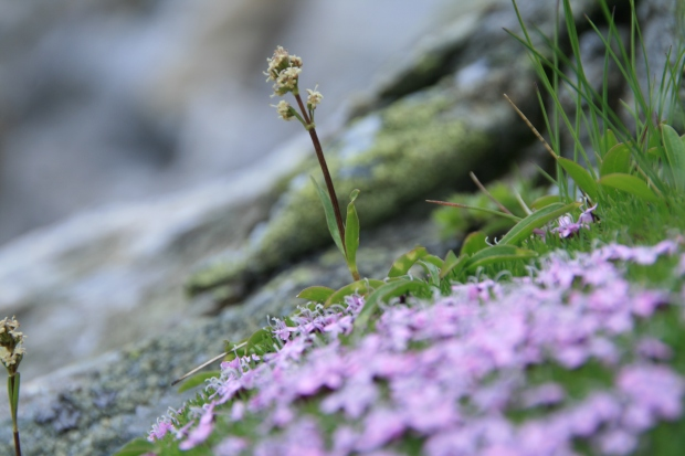 Speick Pflanze 1_©SPEICK Naturkosmetik