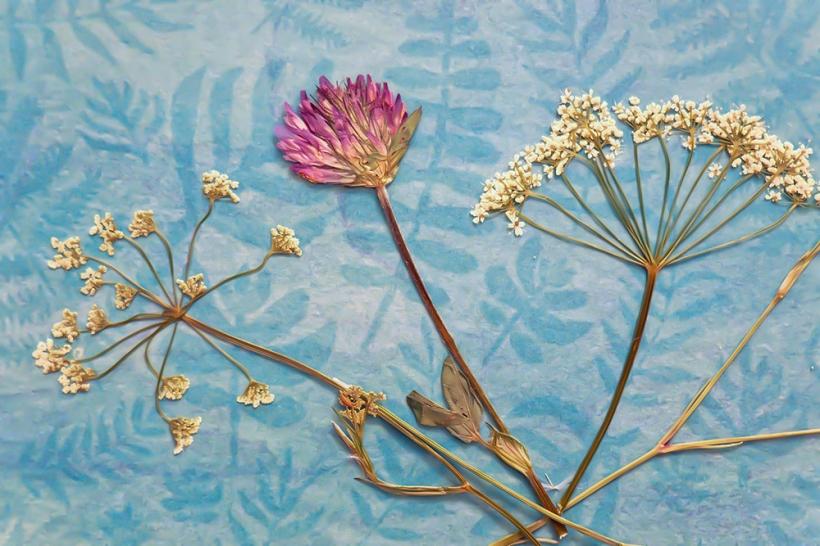 speick naturkosmetik pflanzen rohstoffe